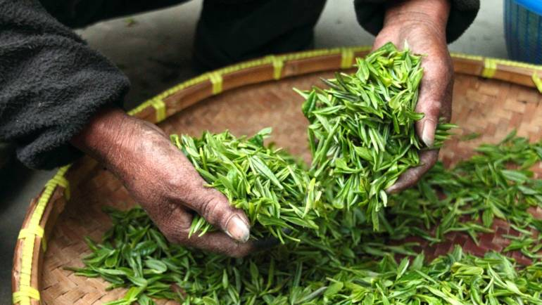 What Indian Tea Should You Drink?