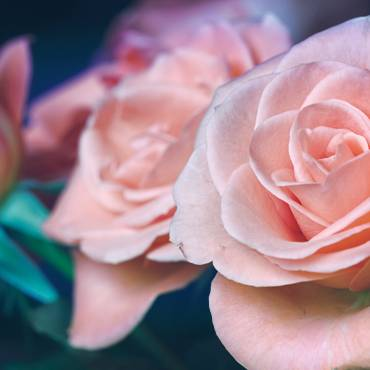 Why You Should Use Rosewater Every Day