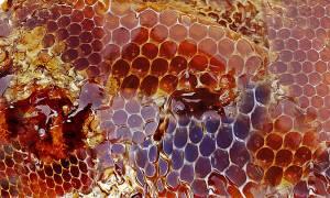 honey-948452_19201